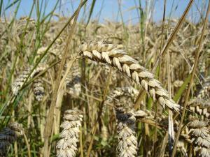 Respuesta a The Economist sobre Doha y la Agricultura